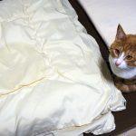 猫が布団の上でおしっこをしてしまったので、布団を自宅で洗いました。