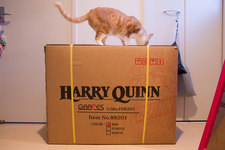 HARRY QUINN(ハリークイン) GRAPESが届きました。
